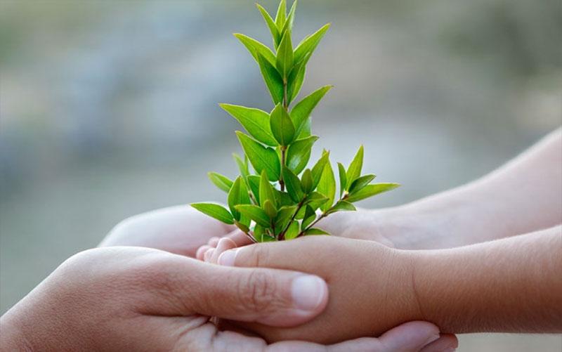 10 cách bảo vệ môi trường sống